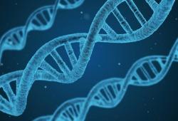 NATURE: 異染色質動態變化影響Rett綜合征患者神經發育