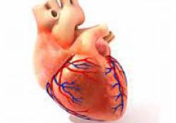 """Heart:<font color=""""red"""">主动</font><font color=""""red"""">脉</font>夹层发病率冬高夏低,日高夜低!"""