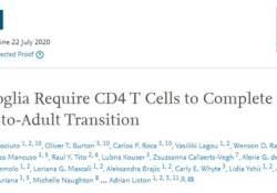 "Cell:<font color=""red"">大脑</font>中存在CD4+T细胞,且影响<font color=""red"">大脑</font>免疫""哨兵""的发育成熟"
