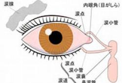 视觉电生理诊断流程指南