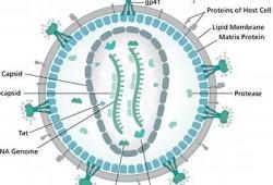 吉利德科学:长效HIV-1衣壳抑制剂Lenacapavir(GS-6207)临床表现良好