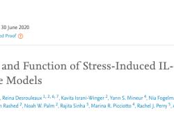 Cell:壓力大,能力差!Cell揭秘棕色脂肪細胞應激機制