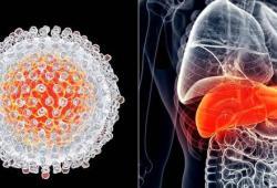 AP&T:免疫耐受期慢性乙型肝炎患者发生肝细胞癌的风险极低