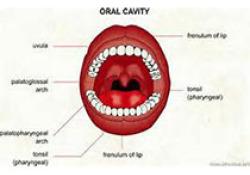 """J Endod:被动超声<font color=""""red"""">冲洗</font>和GentleWave系统作为牙髓再治疗中辅助疗法效果的评估"""