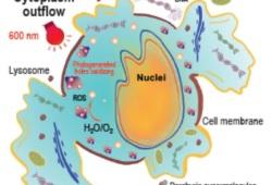 NSR:清华大学朱永法等团队开发新方法:10分钟内消除肿瘤,50天内小鼠存活率从0上升到100%