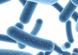 AP&T: 自身免疫性肝炎患者其双歧杆菌相对丰度的疾病特异性明显下降