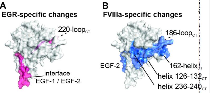 Blood:氢-氘交换质谱法研究FVIII驱动的FIXa的构象变化