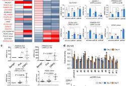 Communications Biology:晚期前列腺癌帐长非编码RNAs与雄激素受体剪接因子相关