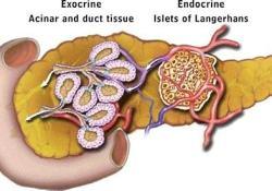 "MS1819联合PERT治疗胰腺功能不全的<font color=""red"">囊性纤维化</font>:II期临床取得积极进展"