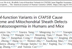 AJHG:曹云霞/张锋团队等鉴定新弱畸精子症致病基因CFAP58