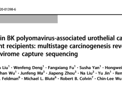 "Oncogene:<font color=""red"">肾移植</font>患者BK多瘤病毒相关尿道肿瘤<font color=""red"">的</font>病毒整合情况研究"