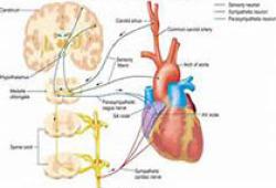 JACC:植入式心律转复除颤器对心衰患者的长期随访结果