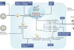 乙肝创新药物研发方向、策略和管线概览