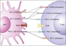 PD-L1单抗Imfinzi在日本获批,治疗广泛期小细胞肺癌