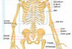 JCEM:甲状旁腺激素与骨密度的关系