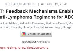 Blood:打破MALT1反馈机制或可使MALT1抑制剂的抗淋巴瘤疗效最大化