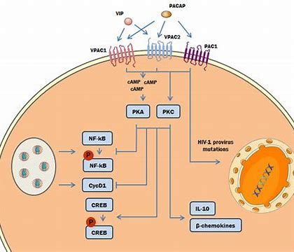 RLF-100(aviptadil)可快速抑制新型冠状病毒的复制!