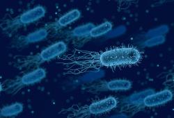 肿瘤里的细菌也有功能?人体微生物组在肿瘤领域的最新进展