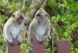 Nature新冠病毒研究進展盤點:候選疫苗保護猴子不受感染?