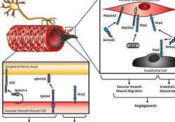"""亚<font color=""""red"""">硝酸</font>钠制剂JAN101治疗COVID-19血管并发症"""