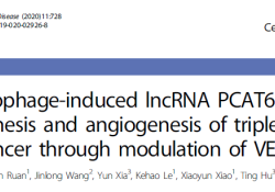 "Cell Death Dis:lncRNA PCAT6促进<font color=""red"">三</font><font color=""red"">阴性</font><font color=""red"">乳腺</font><font color=""red"">癌</font>的发生和血管生成"