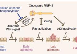 "Nat Commun:磷酸化状态:RNF43的<font color=""red"">抑</font>癌开关"