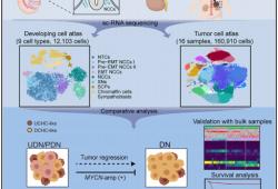 Cancer Cell :重大进展,王佳/李凯/董瑞首次解析神经母细胞瘤单细胞图谱