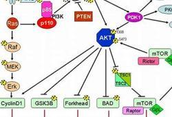 MEN1611治疗乳腺癌的剂量递增试验:结果喜人