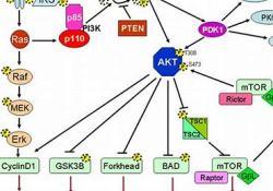 """MEN1611治疗<font color=""""red"""">乳腺</font><font color=""""red"""">癌</font>的剂量递增试验:结果喜人"""