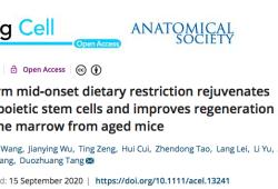 AGING CELL:长期饮食限制使造血干细胞年轻化
