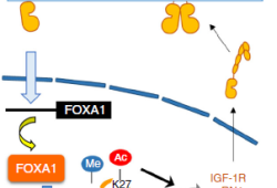 Nat Commun:奥希替尼配合耐药信号抑制明显改善EGFR突变型肺癌的预后