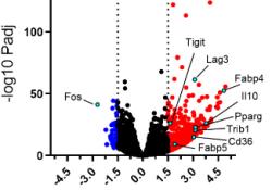 "Blood:脂质代谢增强介导了NK细胞在淋巴瘤中的<font color=""red"">功能</font><font color=""red"">受损</font>"