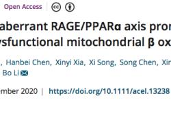 "AGING CELL:上交大团队揭示衰老诱导肝脏脂肪<font color=""red"">变性</font>背后的原因"