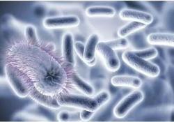 "WorldJGastroenterology:为期两天的灌肠抗生素治疗可<font color=""red"">根除</font>寄生虫感染并缓解症"