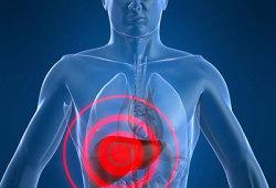 WorldJGastroenterology: 血清铜蓝蛋白可预测乙肝病毒感染患者的肝纤维化程度