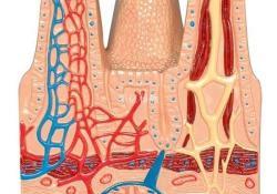 """IBD:<font color=""""red"""">上皮</font><font color=""""red"""">细胞</font>生物标记物可预测克罗恩病对生物制剂的反应"""