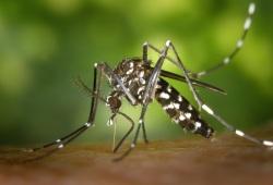 新發現:被蚊子咬一口,居然會中風!