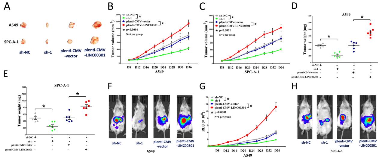 武大孙承操等揭示LINC00301在非小细胞肺癌进展和肿瘤免疫中的重要作用