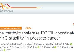 Nat Commun:DOT1L调控前列腺癌中AR和MYC的稳定性