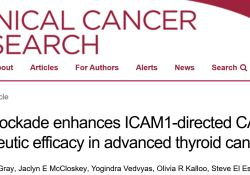 "Clin Cancer Res:PD1阻断可增强ICAM1靶向CAR T细胞对晚期<font color=""red"">甲状腺</font><font color=""red"">癌</font>的治疗效果"