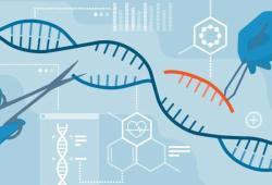 基因编辑的未来遭质疑,因严重安全问题,FDA暂停基于基因编辑的CAR-T临床试验