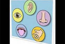 Allergy:早发特应性皮炎的恶化与儿童气源过敏原致敏和过敏性鼻炎的发生有关么?