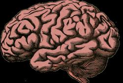 2021 ESO指南:占位性脑梗死的管理