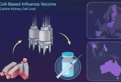 NEJM:细胞培养四价流感疫苗对儿童流感的预防效果研究