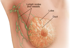 science advance: 癌细胞操纵神经系统?纳米颗粒来解救! 成功抑制了肿瘤的发展和转移