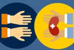 KIDNEY INT REP:成人活体肾移植供体年龄及供受体年龄差对移植结果的影响