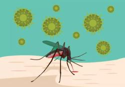 "PNAS:清华医学院程功团队揭示适应性进化导致寨卡病毒<font color=""red"">流行</font>机制"