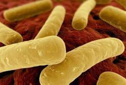 Dig Dis Sci: 免疫抑制剂的使用会增加艰难梭菌感染复发的风险