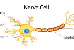 Neurology:继发性进展性多发性硬化临床试验的可靠性