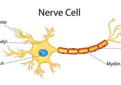 """Neurology:继<font color=""""red"""">发性</font>进展性<font color=""""red"""">多发</font><font color=""""red"""">性</font>硬化临床试验的可靠性"""